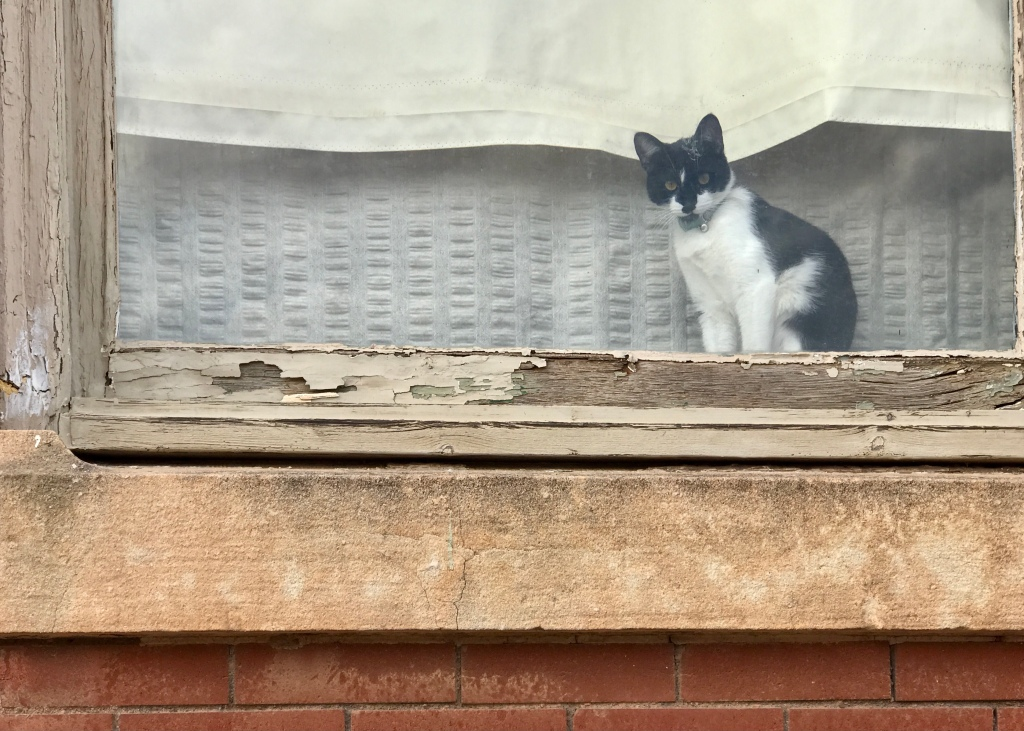 Kitten in a window